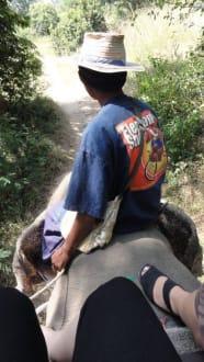 Elephanteguide - Hua Hin Safari & Adventure Park