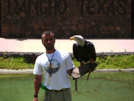 Greifvogelshow - Reitschule Rancho Texas