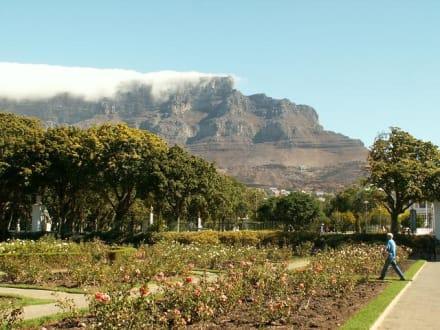 Tafelberg vom Botanischen Garten aus - Tafelberg