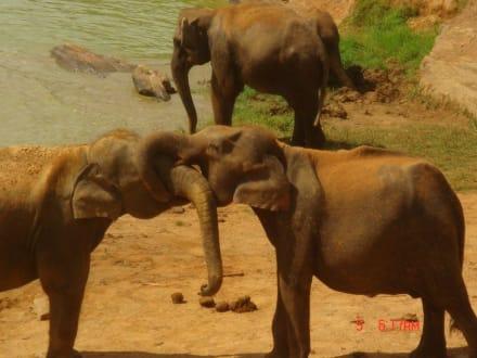 Im Elefantenwaisenhaus - Elefantenwaisenhaus Pinnawela