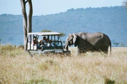 Elefant beim Jeep - Masai Mara Safari