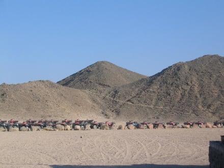 Wüstentour - Wüste