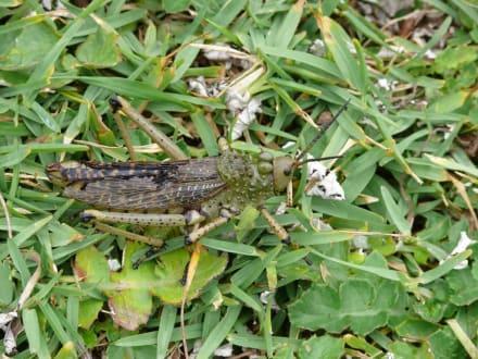 Kleine Tiere beobachten... - Tsitsikamma National Park