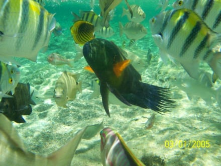 Strand - Schnorcheln Sharm el Sheikh