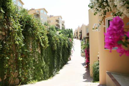 Villa Garden -