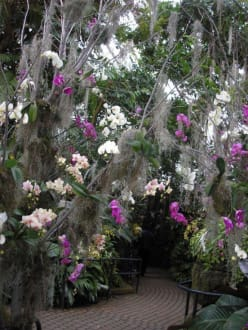 Orchideen - Franklin Park Conservatory