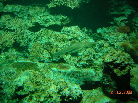 Aquarium - Tierpark und Fossilium Bochum
