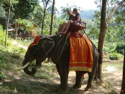 Elephant Trekking - Elefanten Trekking