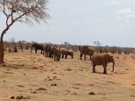 Noch mehr Elefanten... - Tsavo Ost Nationalpark