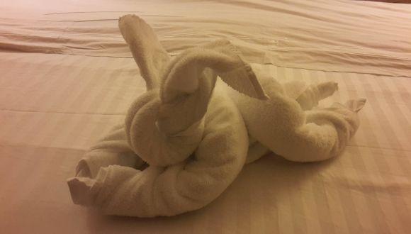Handtuchhase